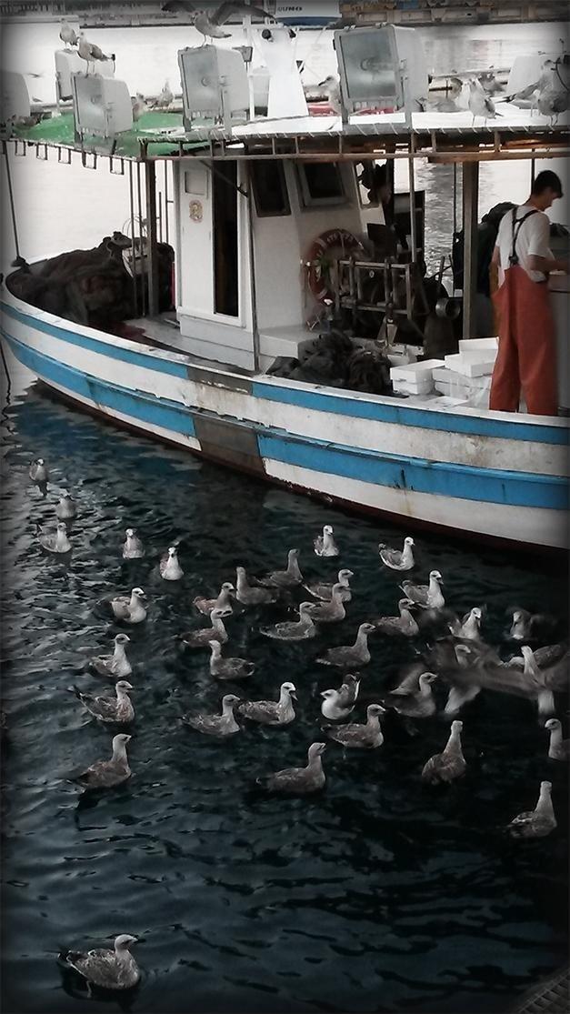 Pesca nel golfo