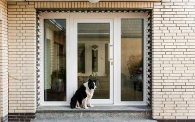 cane che aspetta davanti da una vetrata