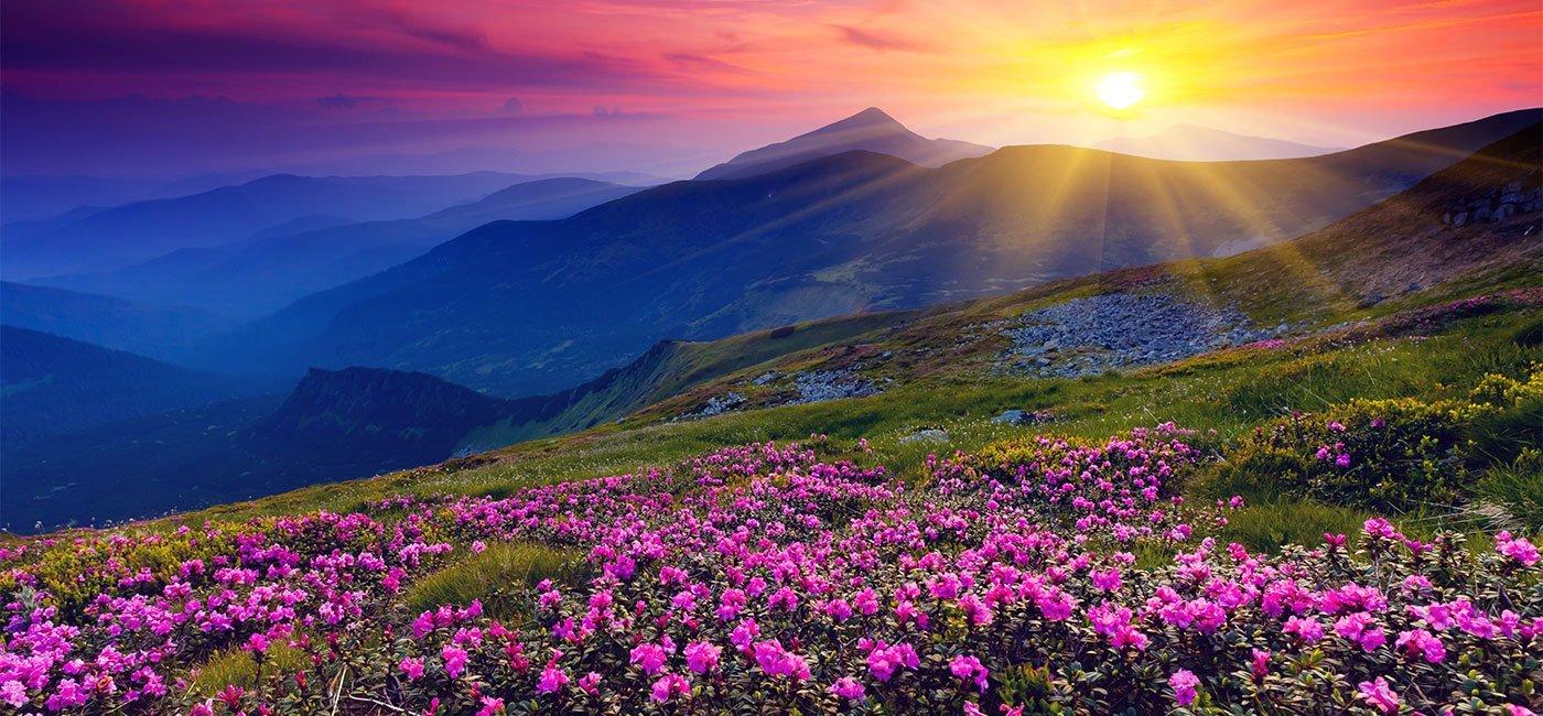 prato collinare ricoperto di fiori