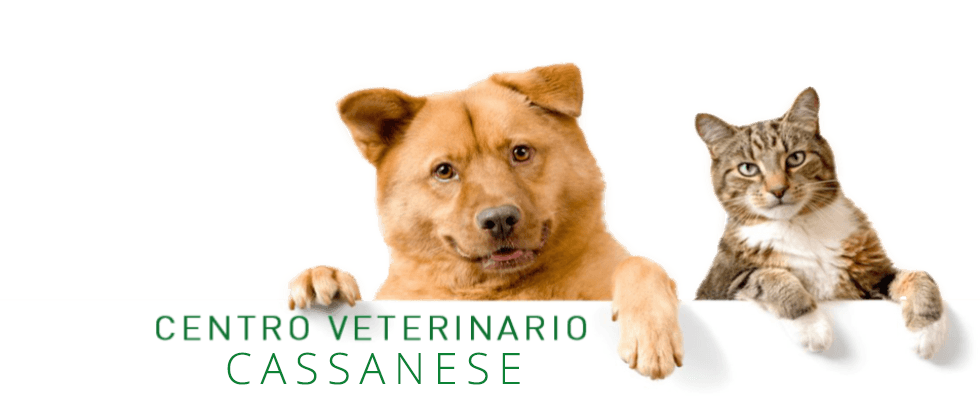 Ambulatorio veterinario cassanese