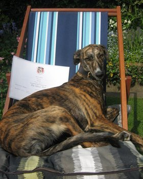 Dog relaxing in a deck chair