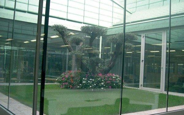 Vista attraverso i vetri di fiori colorati e un albero in una vasca esterna con dell'acqua
