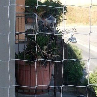 DETTAGLIO RETE INSTALLATA A PROTEZIONE DEL BALCONE