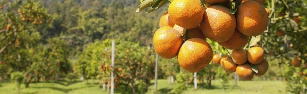 impianti per frutteti polistena