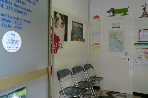 attesa veterinario