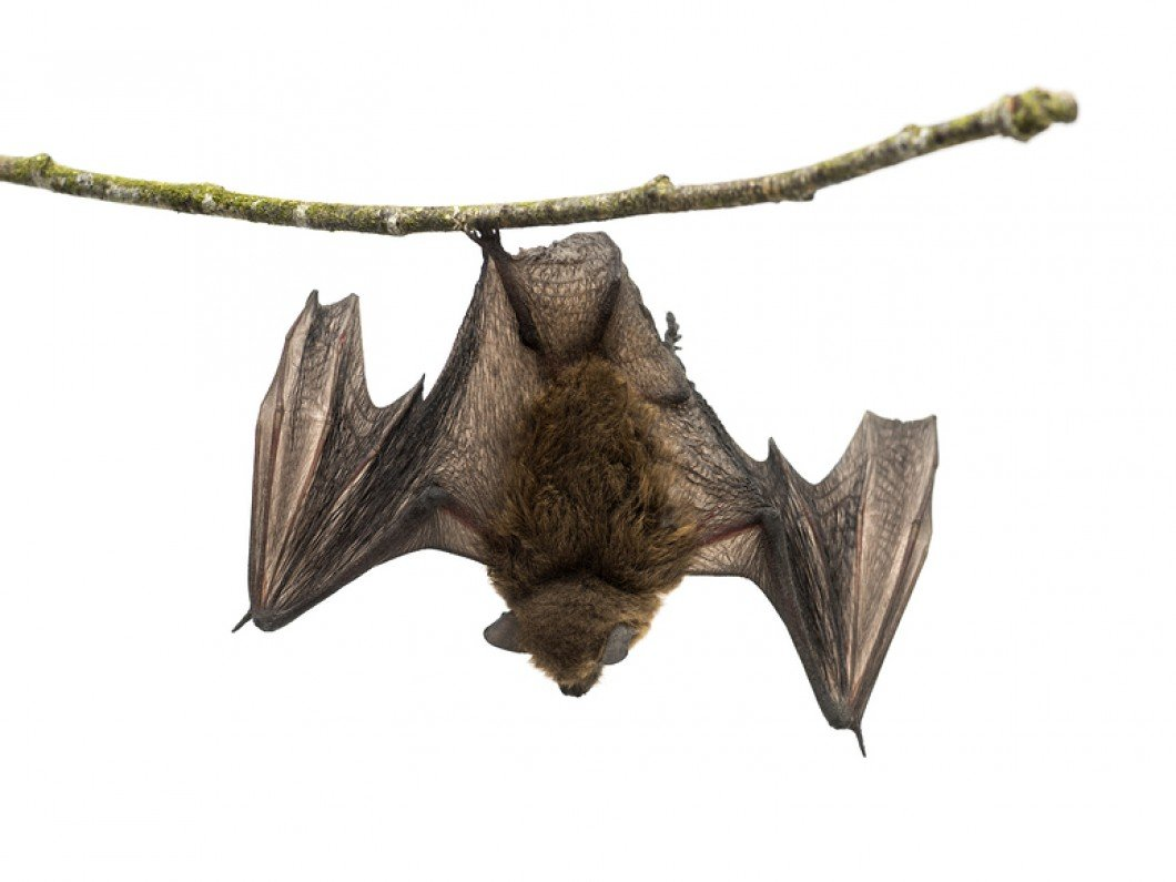 Bat Relocation