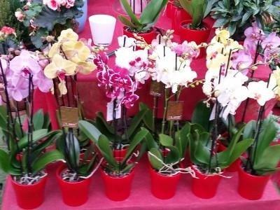 vendita fiori e giardinaggio