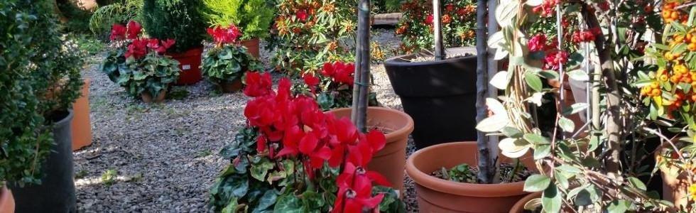 vendita vasi ornamentali