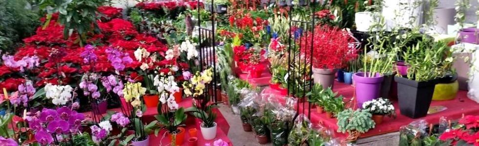 fiorista Messina
