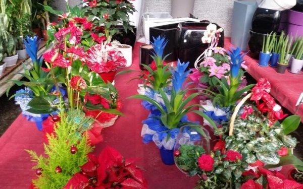 vendita fiori in vaso