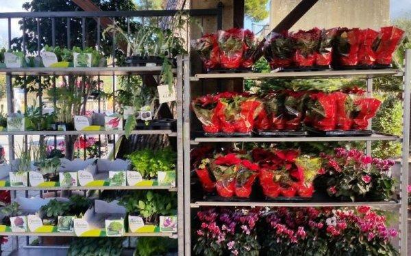 vasetti e aromi