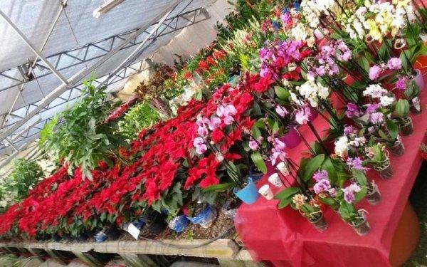 esposizione fiori Messina