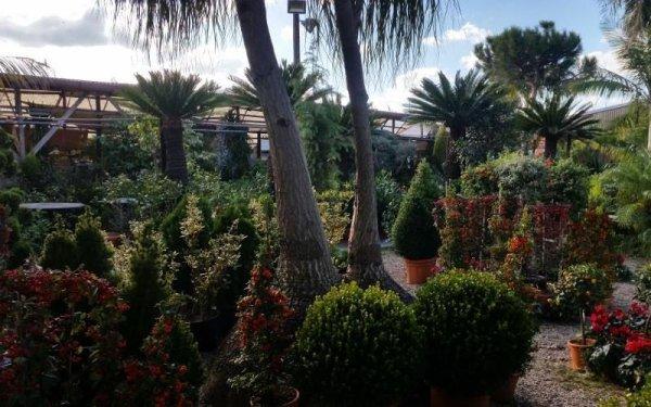 vendita palme e arbusti