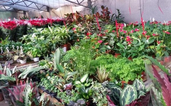 edera e piante