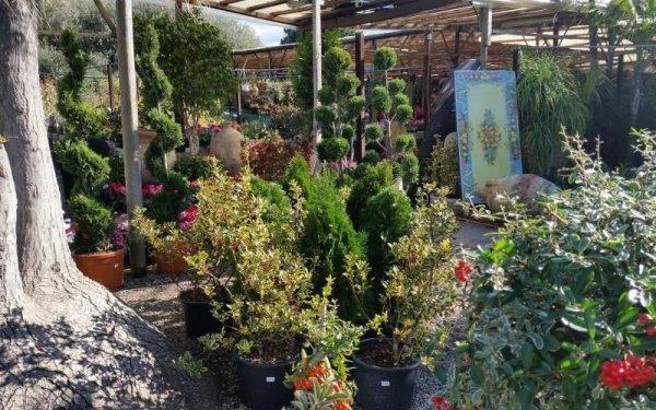 vendita piante Messina