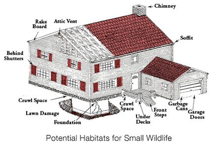 Home wildlife prevention company in Sherman, CT