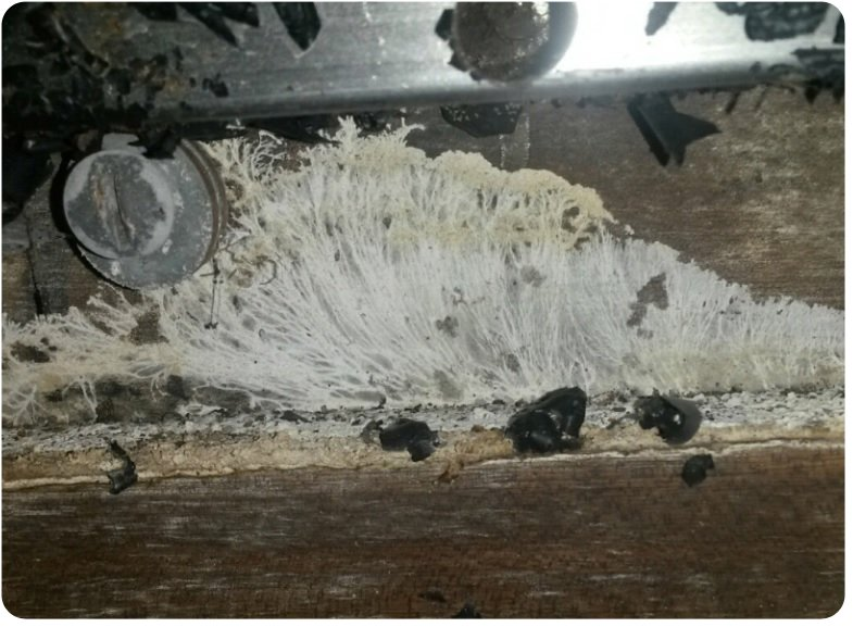 Wet Rot on the board