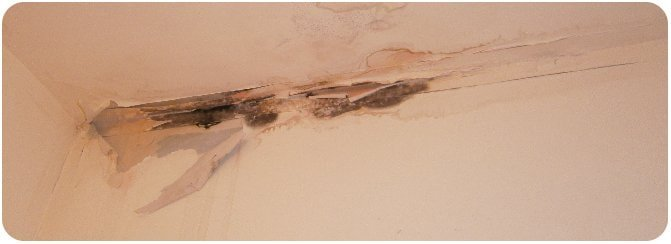 ceiling fabrics damaged by damp