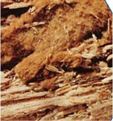 Wet rot
