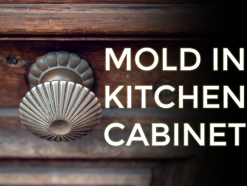 Mold In Kitchen Cabinets