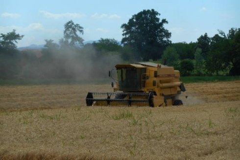 Tagliatura grano