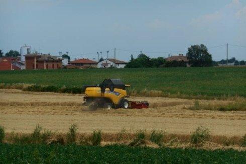 Tagliatura grano pelagatti srl