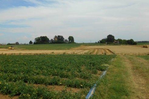 Servizi agricoli per conto terzi Pelagatti srl