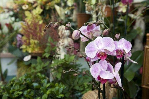 fornitura fiori eventi