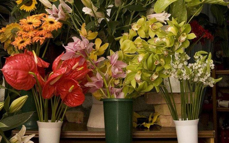 vendita fiori naturali