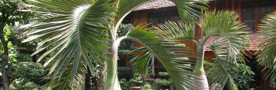 Patio with plants from a plant rental and maintenance company in Honolulu, HI