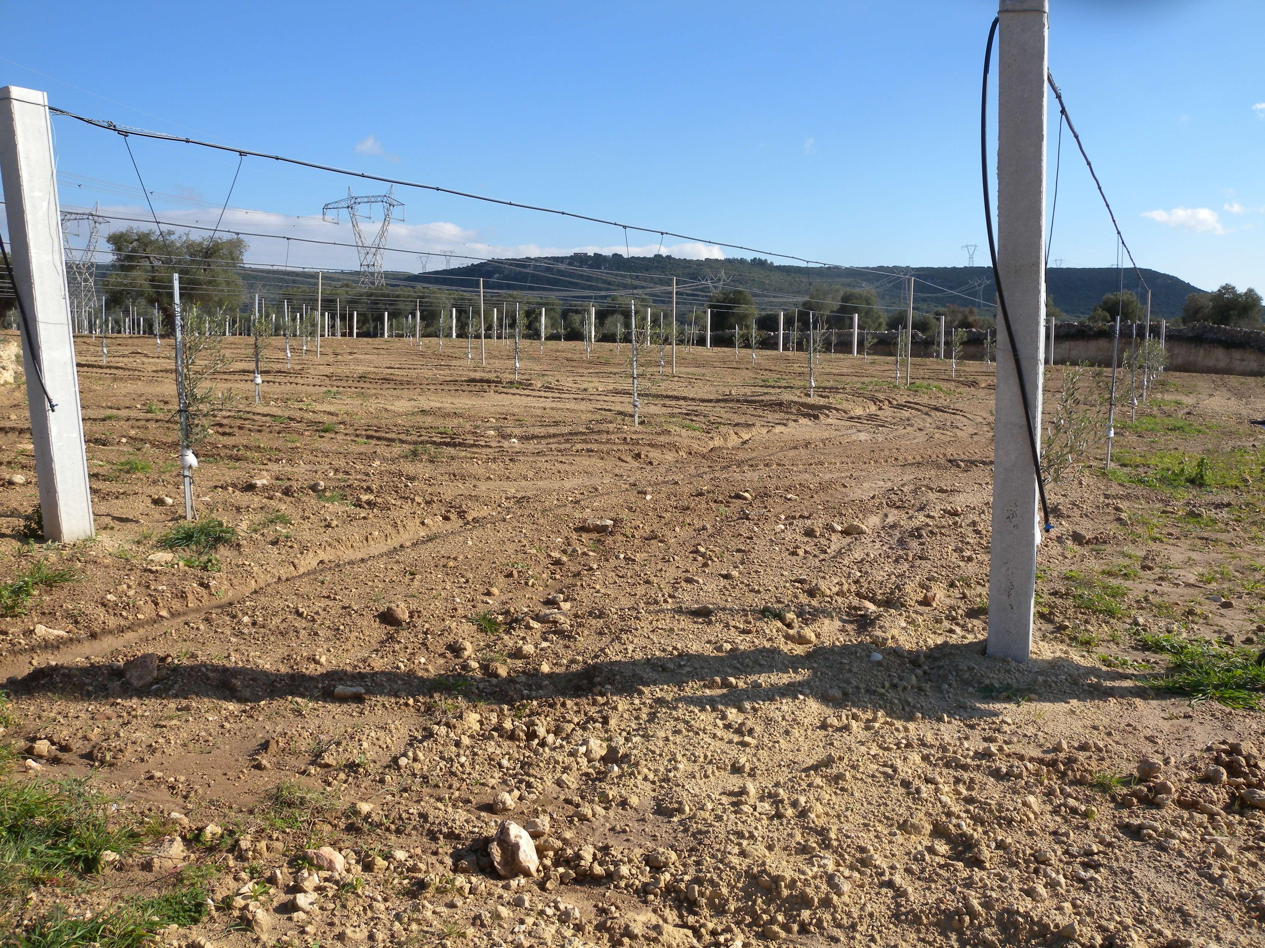 trave conficcata in terreno agricolo