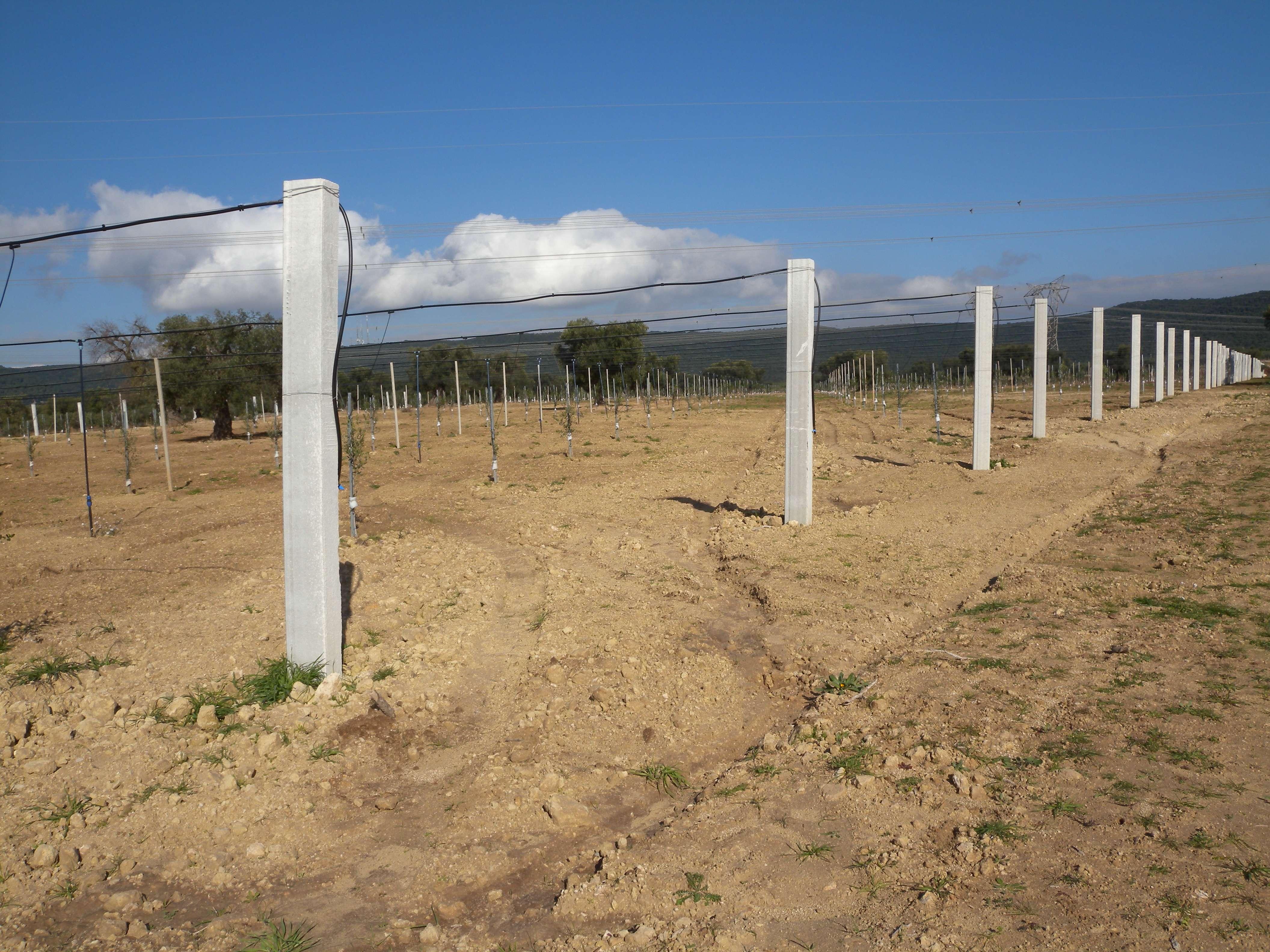 campo con ulivi e travi bianche