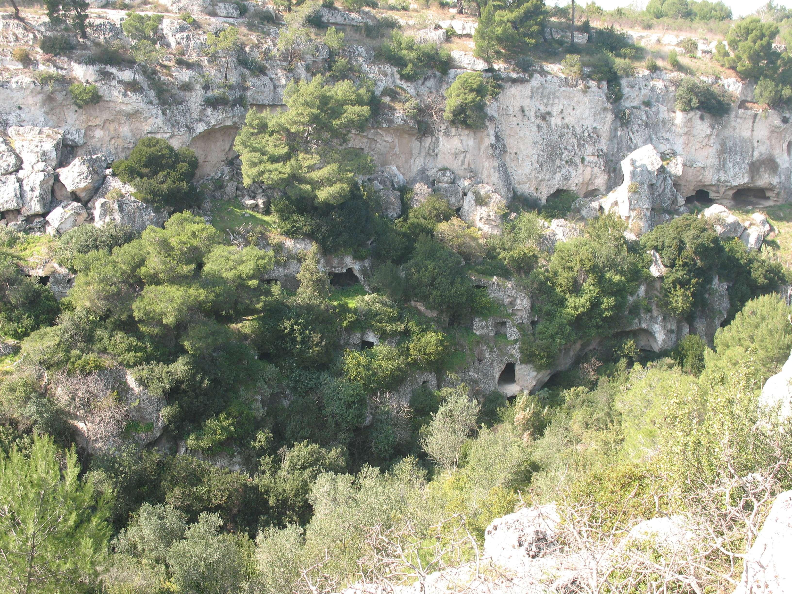 particolare roccia e vegetazione