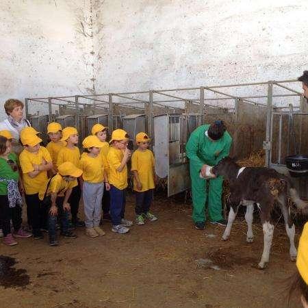 un addetto mostra a dei bambini l'allattamento di un animale in una stalla