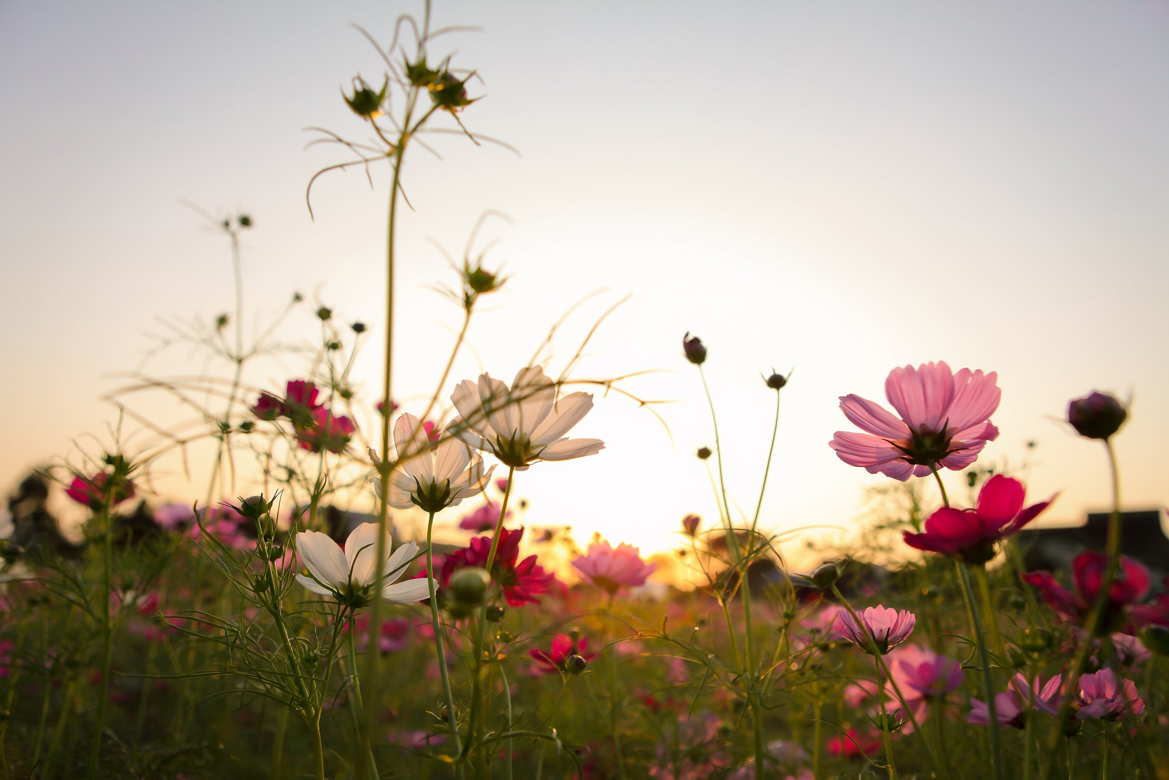 primo piano di fiori in un giardino