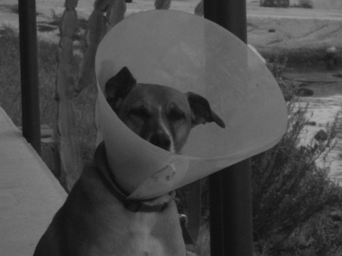 visite veterinarie domiciliari