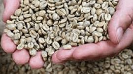 vendita chicchi di caffè