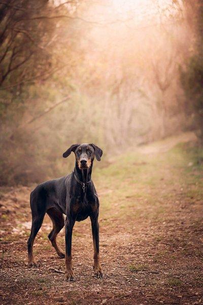 cane in un bosco