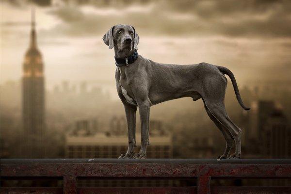 cane che guarda l`orizzonte