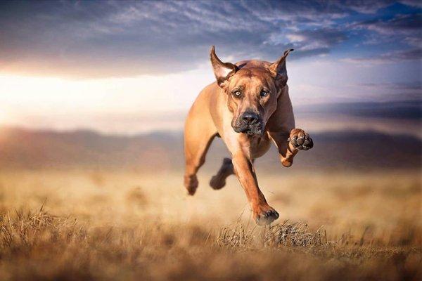cane corre  in uno spazio arido