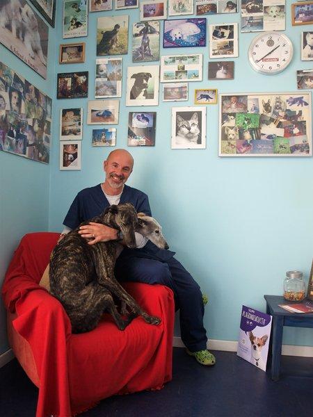 veterinario seduto su una poltrona con due cani