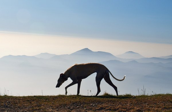 cane che annusa con montagne all`orizzonte