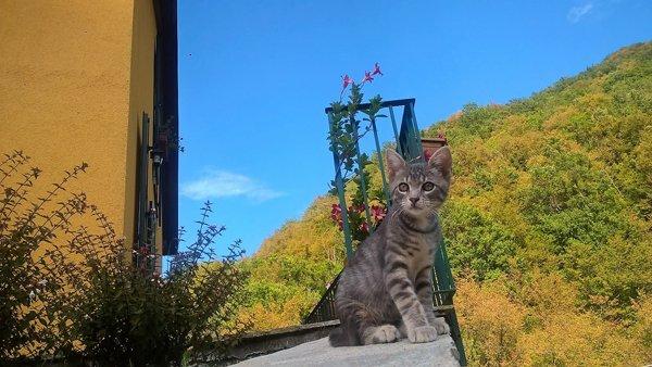 gatto  su un davanzale
