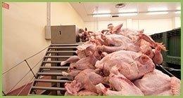 distribuzione di pollame