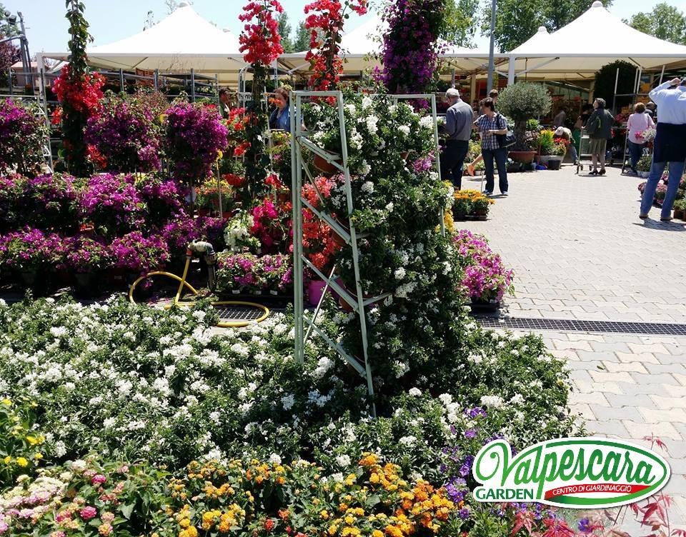 Vendita piante e fiori pescara valpescara garden for Vendita piante e fiori