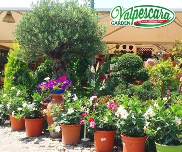 vivaio valpescara Garden bonsai
