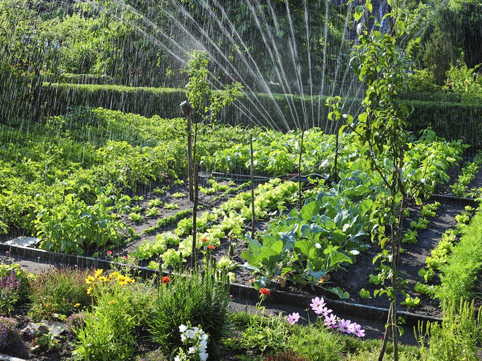 serra con irrigatori