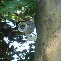 CCTV fitted on to the tree