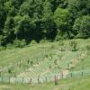 agricoltura, coltivazione, ortaggi freschi