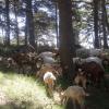 fattoria, fattoria didattica, formaggi di capra